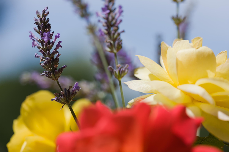 Photographie Florale Life Views